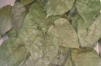 Natural Dried Betel Leaf