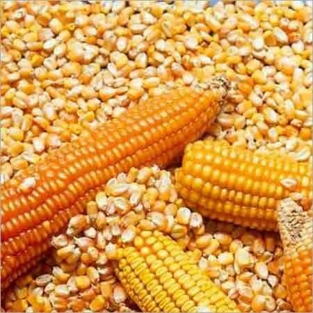 Organic Nutritional Fresh Maize