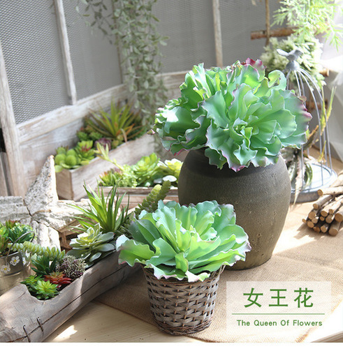 Succulent Plant, Succulent Plant Manufacturers & Suppliers, Dealers