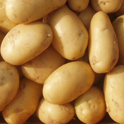 Fresh And High Grade Potatoes