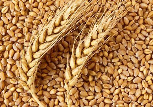 High Quality Grains Wheat