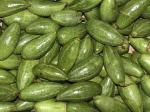 100% Fresh Green Parwal
