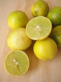Fresh Citrus Limonum