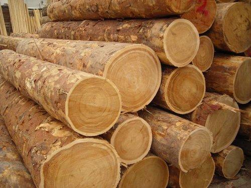 High Grade Timber Log