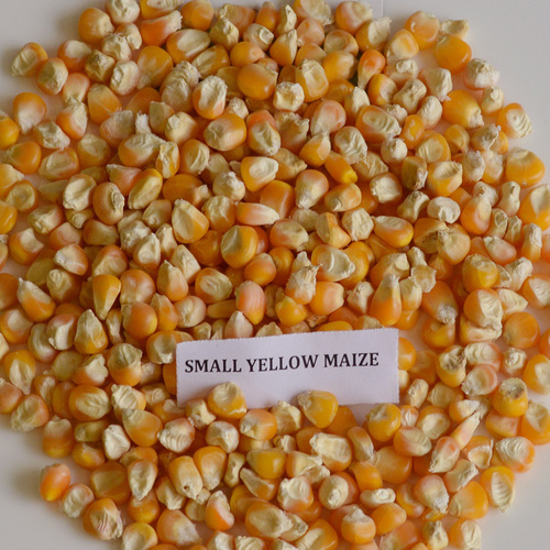 High Grade Yellow Maize