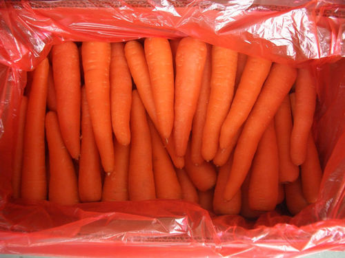Regular Shape Fresh Carrot