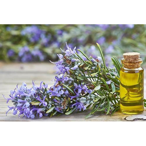 Highly Demanded Rosemary Oil