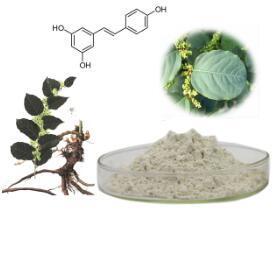 100% Natural High Quality Resveratrol Polygonum Cuspidatum Extract Powder