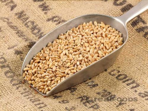 Natural Organic Wheat Grain