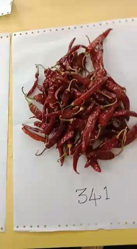 Dry Red Chilli In Guntur, Andhra Pradesh - Dealers & Traders