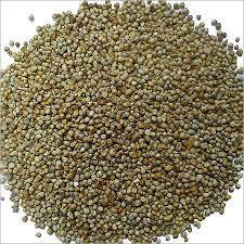 Best Quality Bajra Seed