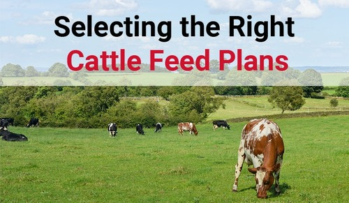 Superior Quality Cattle Feed