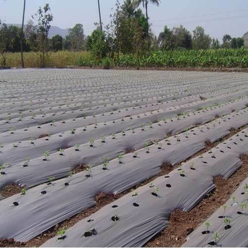Highly Advantageous Mulch Film