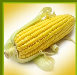 Best Price and High Quality Maize