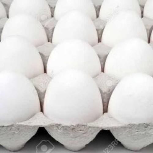 Fresh Poultry White Eggs