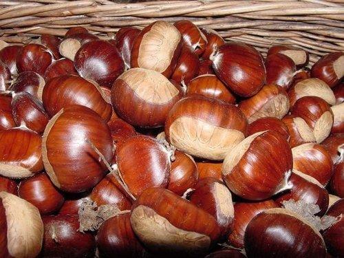 Organic Sweet Fresh Chestnut