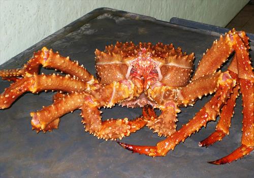 Fresh Frozen Alaska Crab