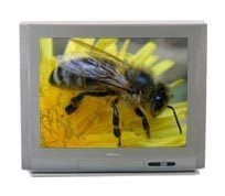 Perfect Finish Color Televisions (29 Inch)