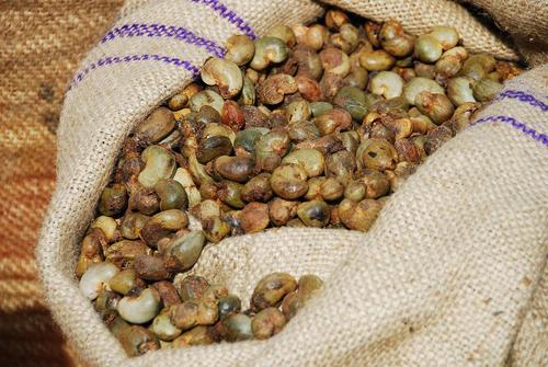 Certified Organic Cashew Nuts