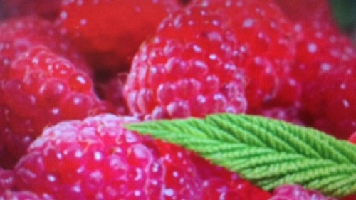 High Grade Fresh Strawberry
