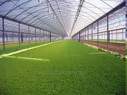 Industrial Green House
