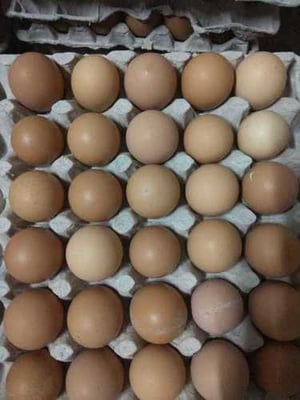 Brown Country Chicken Eggs