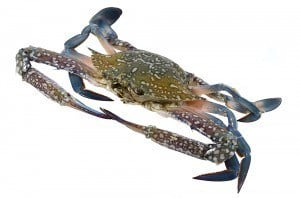 Safe to Use Crab