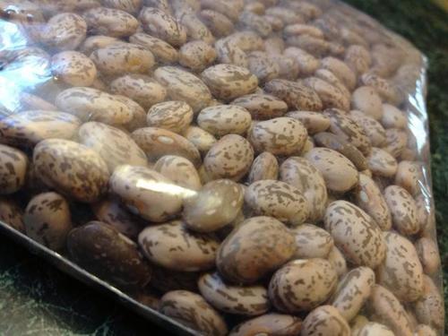 Natural Pinto Kidney Bean