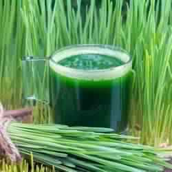 High Grade Wheatgrass Juice