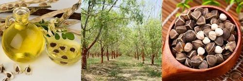 Pure 100% High Quality Virgin Moringa Oleifera Seed Extract Oil