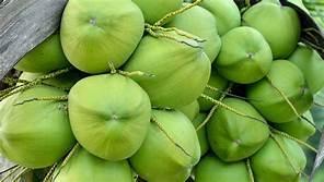 Green Coconut In Delhi, Green Coconut Dealers & Traders In