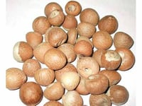 High Grade Arecanut Palm