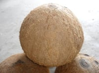 Fresh Tufted Coconuts