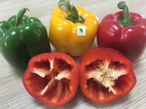 CTD Fresh Bell Pepper/Capsicum