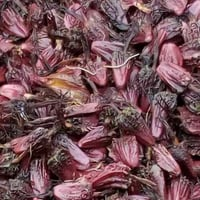 Export Quality Red Cardamom