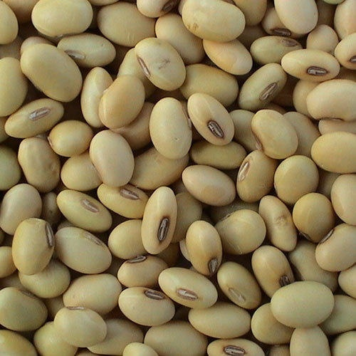 High Nutritional Soya Bean in Cape Town, Western Cape - Wangcoagriexport