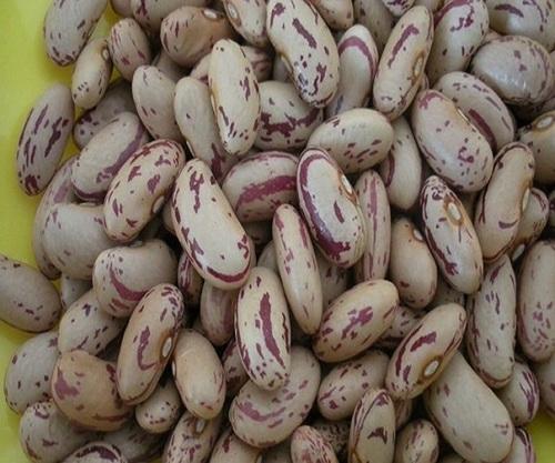 Light Speckled Kidney Beans Broken Ratio 0 5 Max Price 750 Usd Usd Ton Id 5354104
