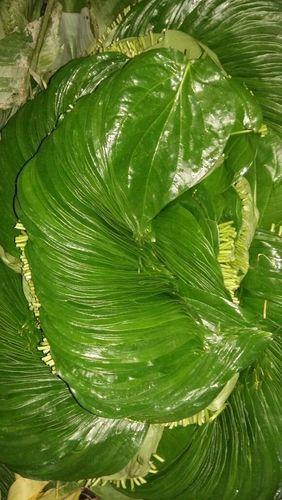 Betel Leaves - Sweet