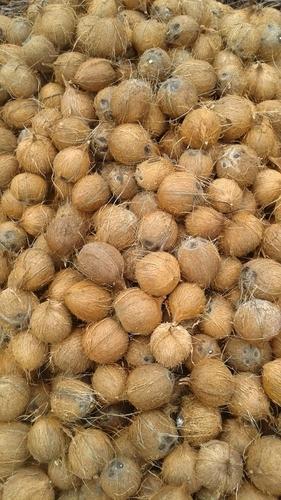 Coconut In Rajahmundry, Coconut Dealers & Traders In