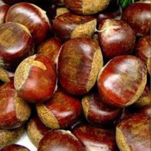 Premium Grade Raw Chestnut