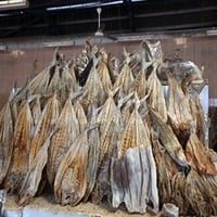 Quality Salmon And Frozen Cod Dry Fish
