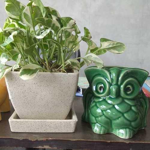 Handmade Bonsai Ceramic Planter