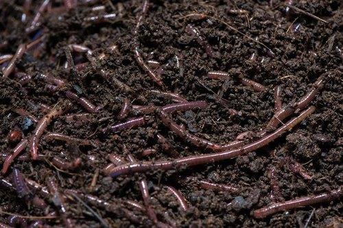 Vermicompost Fertilizer For Agriculture