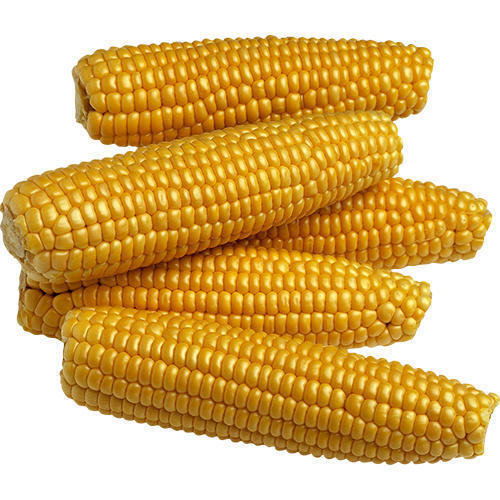 No Artificial Flavour Sweet Corn