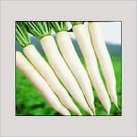 Organic Fresh White Radish