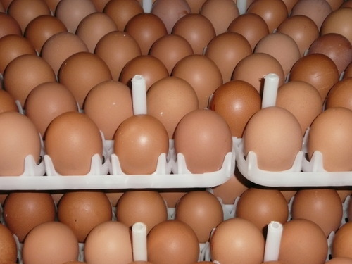 Image result for bv 380 layer brown uniform egg