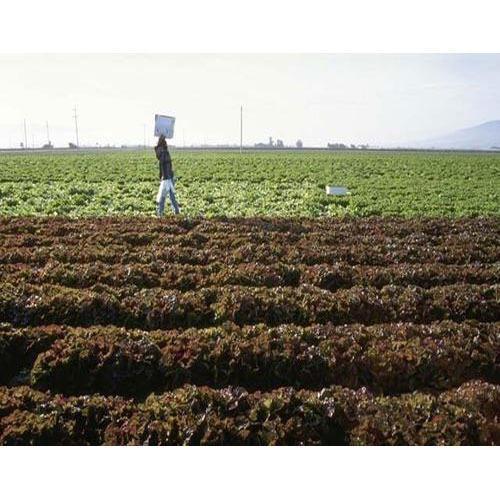 Enriched Organic Fertilizer For Garden