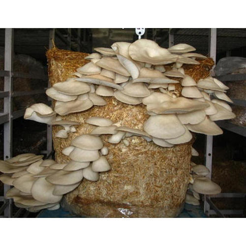 Mushroom Composting Services