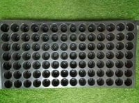 98 Cell Black Seedling Tray