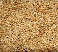 High Nutritional Foxtail Millet